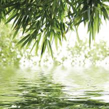 Decoratieve wand Element 3D Bambou & Water